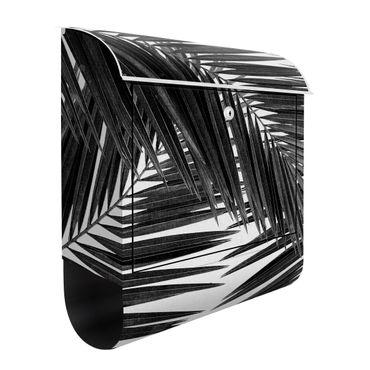 Cassetta postale - Scorcio tra foglie di palme in bianco e nero