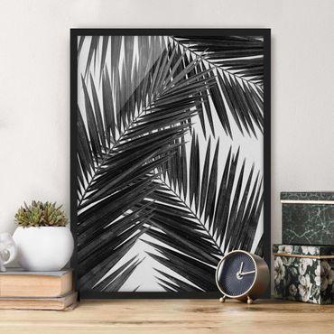 Poster con cornice - Scorcio tra foglie di palme in bianco e nero