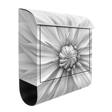 Cassetta postale - Fiori botanici in bianco