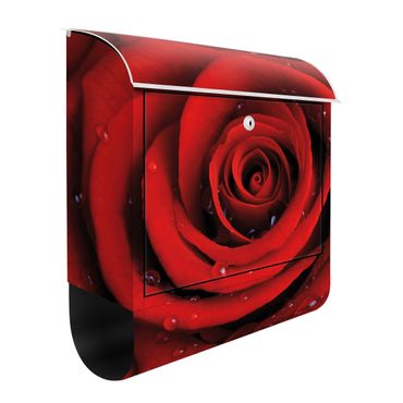 Cassetta postale Red rose with water drops 39x46x13cm