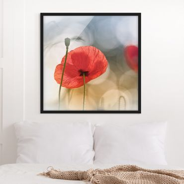 Poster con cornice - Poppies In The Morning - Quadrato 1:1