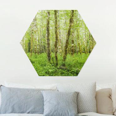 Esagono in Alu-dibond - Hoh Rain Forest nel Parco Nazionale olimpica