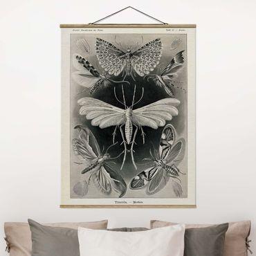 Foto su tessuto da parete con bastone - Vintage Consiglio falene e farfalle - Verticale 4:3
