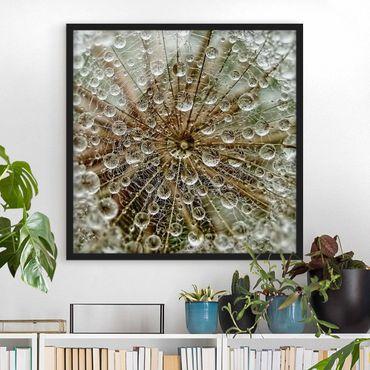 Poster con cornice - Dandelion In Autumn - Quadrato 1:1