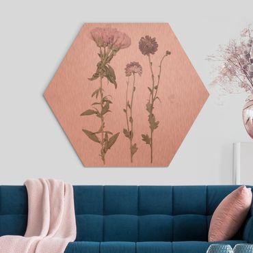 Esagono in Alu-dibond - Herbarium In Pink IV