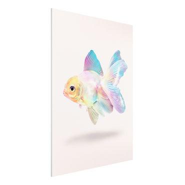 Stampa su Forex - Pesce In Pastel - Verticale 4:3