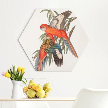 Esagono in Alu-dibond - Tropical Parrot I