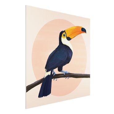 Stampa su Forex - Illustrazione Uccello Toucan pastello pittura - Quadrato 1:1