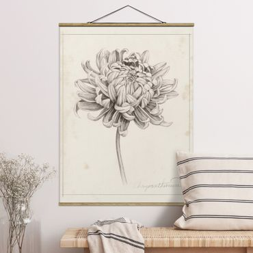 Foto su tessuto da parete con bastone - Botanical Study I Chrysanthemum - Verticale 4:3