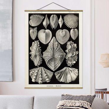 Foto su tessuto da parete con bastone - Conchiglie consiglio Vintage II - Verticale 4:3