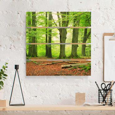Stampa su legno - Mighty Beech Trees - Quadrato 1:1