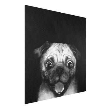 Stampa su Forex - Illustrazione Pug Dog Pittura Su Bianco e nero - Quadrato 1:1