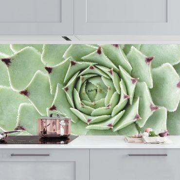 Rivestimento cucina - Stone Rose Jovibarba pianta succulenta