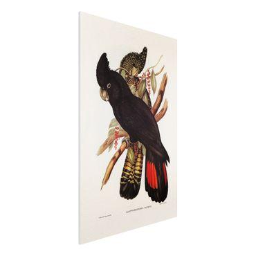Stampa su Forex - Illustrazione Vintage Black Cockatoo Nero Oro - Verticale 3:2