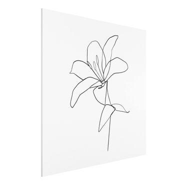 Stampa su Forex - Fiore Line Art Nero Bianco - Quadrato 1:1