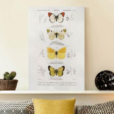 Stampa su tela - Vintage Consiglio Farfalle II - Verticale 3:2