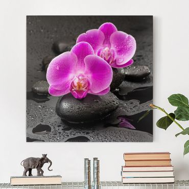 Stampa su tela - Pink Orchid Fiori Sulle Pietre Con Le Gocce - Quadrato 1:1