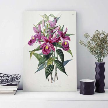 Quadro in vetro - Maxim Gauci - Orchid I - Verticale 3:2