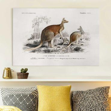 Stampa su tela - bordo Vintage Kangaroo - Orizzontale 2:3