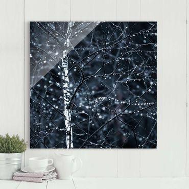 Quadro in vetro - Betulla scura nella fredda pioggia