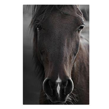Stampa su tela - Cavallo scuro