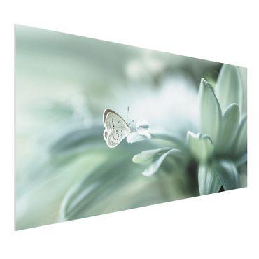 Quadro in forex - Farfalla E Gocce di rugiada In Pastel Verde - Orizzontale 2:1