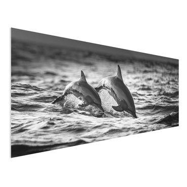 Quadro in forex - Due delfini che saltano - Panoramico