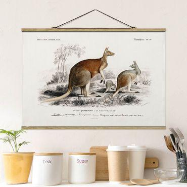Foto su tessuto da parete con bastone - bordo Vintage Kangaroo - Orizzontale 2:3