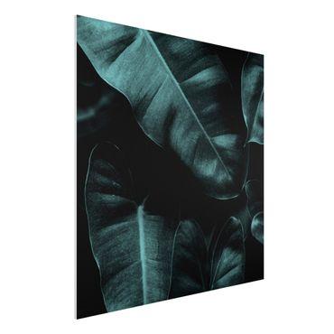 Stampa su Forex - Foglie della giungla verde scuro - Quadrato 1:1