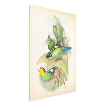 Stampa su Forex - Illustrazione Vintage Uccelli tropicali - Verticale 4:3