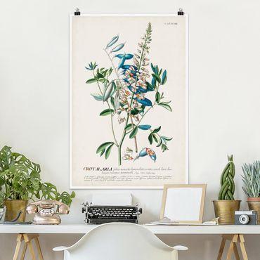 Poster - Vintage botanico Legumi Illustrazione - Verticale 3:2