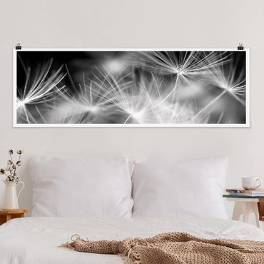 Poster - Moving sfondo Denti di leone Close Up On Black - Panorama formato orizzontale