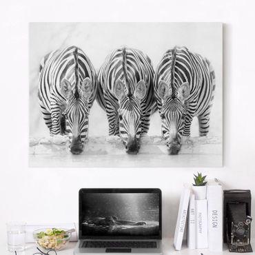 Stampa su tela - Zebra Trio in bianco e nero - Orizzontale 4:3