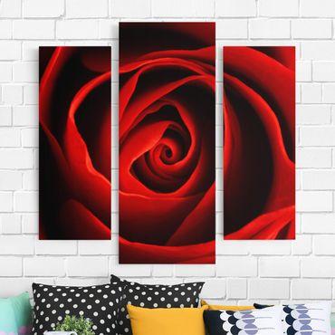 Stampa su tela 3 parti - Lovely Rose - Trittico da galleria