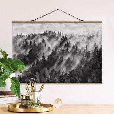 Foto su tessuto da parete con bastone - Raggi Luce nella foresta di conifere - Orizzontale 2:3