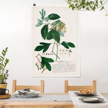 Poster - Vintage botanica Laurel - Verticale 3:2
