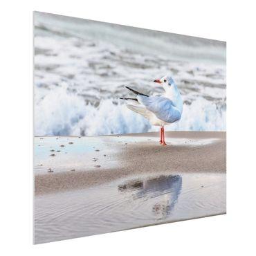 Stampa su Forex - Gabbiano Sulla Spiaggia Di Fronte Al Mare - Orizzontale 3:4