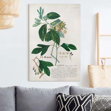 Stampa su tela - Vintage botanica Laurel - Verticale 3:2