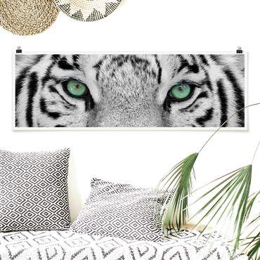 Poster - white Tiger - Panorama formato orizzontale