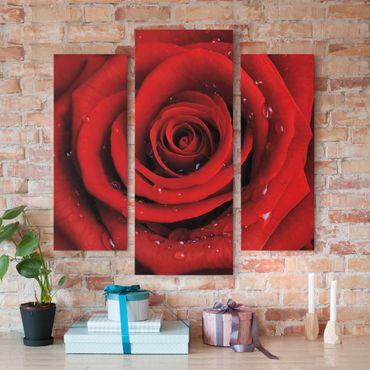 Stampa su tela 3 parti - Red Rose With Water Drops - Trittico da galleria