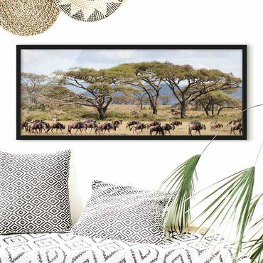 Poster con cornice - Mandria Di Gnu Nella Savana - Panorama formato orizzontale