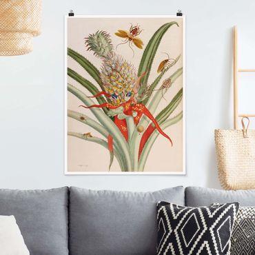 Poster - Anna Maria Sibylla Merian - Ananas con Insetti - Verticale 4:3