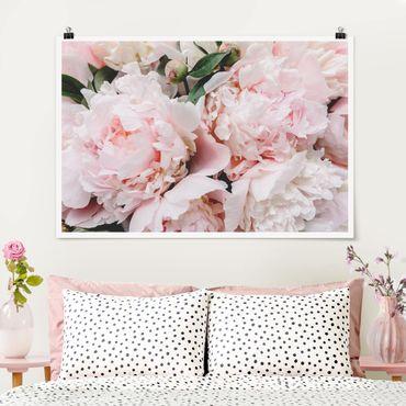 Poster - Peonie rosa chiaro - Orizzontale 2:3
