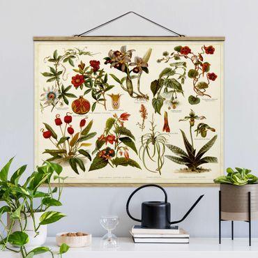 Foto su tessuto da parete con bastone - Vintage Consiglio Tropical Botanica II - Orizzontale 3:4