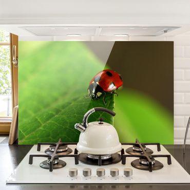 Paraschizzi in vetro - Ladybird