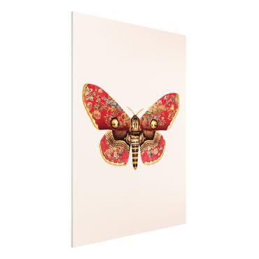 Stampa su Forex - Vintage Moth - Verticale 4:3