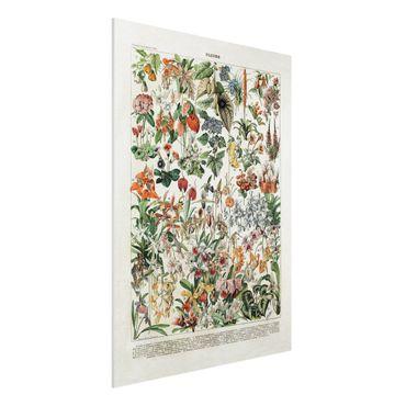 Stampa su Forex - Vintage Consiglio Flowers III - Verticale 4:3