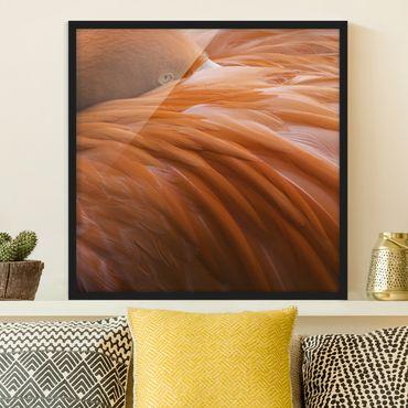 Poster con cornice - Flamingo Feathers - Quadrato 1:1