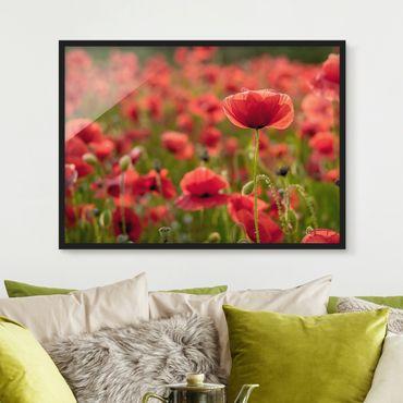 Poster con cornice - Poppy Field In Sunlight - Orizzontale 3:4