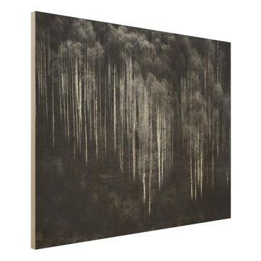 Quadro in legno - Foreste di betulle in Aspen - Orizzontale 4:3